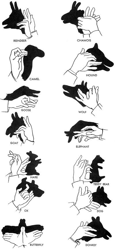 Master the art of shadow puppets.