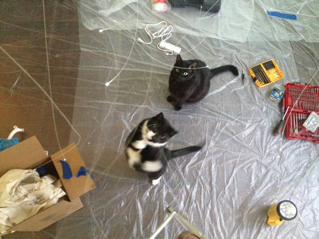 These cats thought I was making them their own Bubble's Kittyland