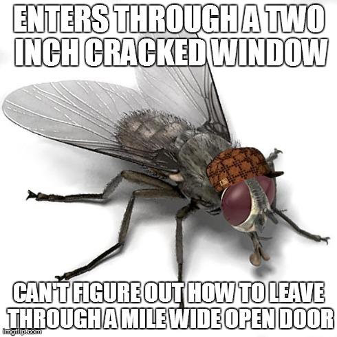 Scumbag House Fly